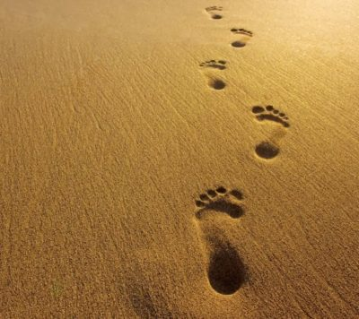 Un percorso giornaliero per scoprire il gusto della vita e lasciare per strada pesi, dolori, fatiche, abitudini tossiche
